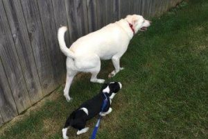 Professional Pet Sitting by Waggs 2 Whiskers offers dog walking for your fur babies