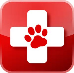 Are you and your pet prepared in an emergency?