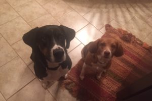 Pet Sitters in Shelbyville, Kentucky