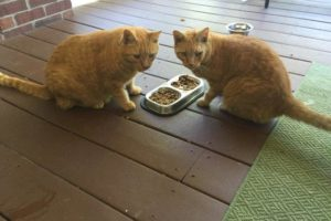 Cat Sitters in Jefferson County, Ky